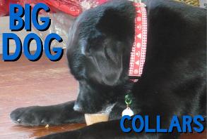 dog-collars_big-dog.jpg