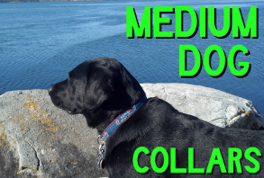 dog-collars_med-dog.jpg
