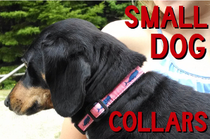 dog-collars_small-dog.jpg