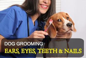 dog_grooming-ears_eyes_teeth_nails.jpg