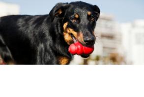 dog_toys-chew_toys.jpg