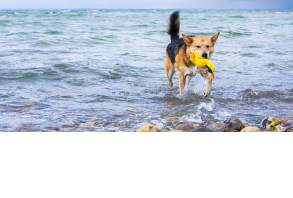 dog_toys-water_toys.jpg