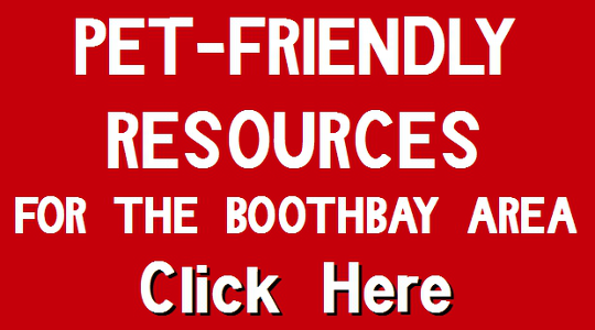 Planning a pet-friendly trip to Boothbay?