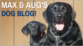 Max & Aug's Dog Blog!