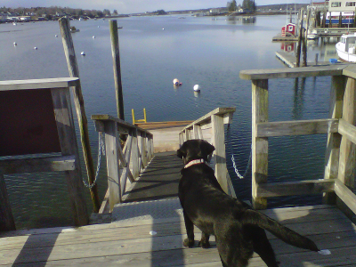 Max and Augs Dog Blog
