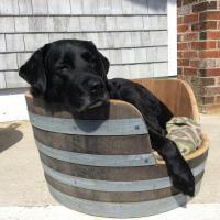 Wine Barrel Dog Bed - Raffle Tickets