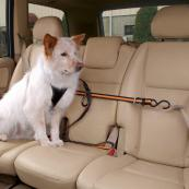 Dog Car Safety Zip Line Restraint