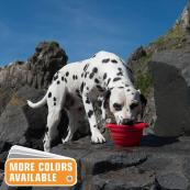 Collapsible Silicone Dog Water Bowl