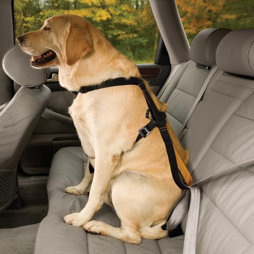 Dog Car Safety >> Dog Car Safety Harness