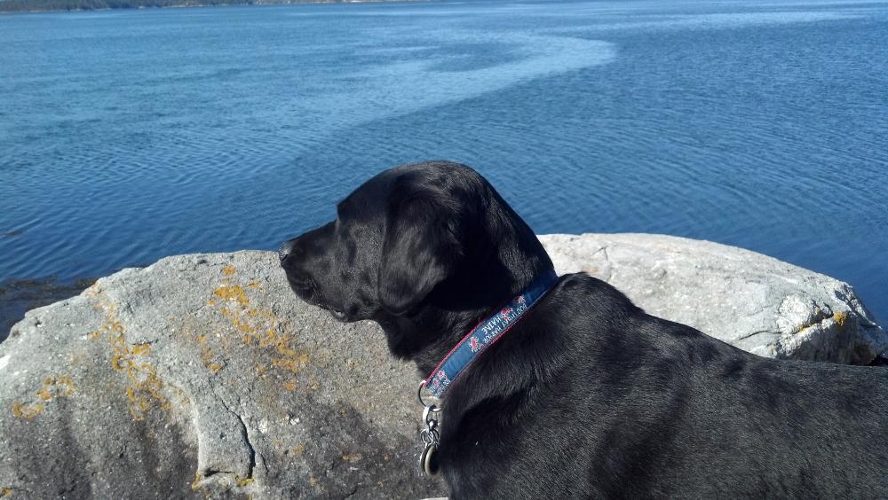 BC-dog-collar-boothbay-red-2.jpg