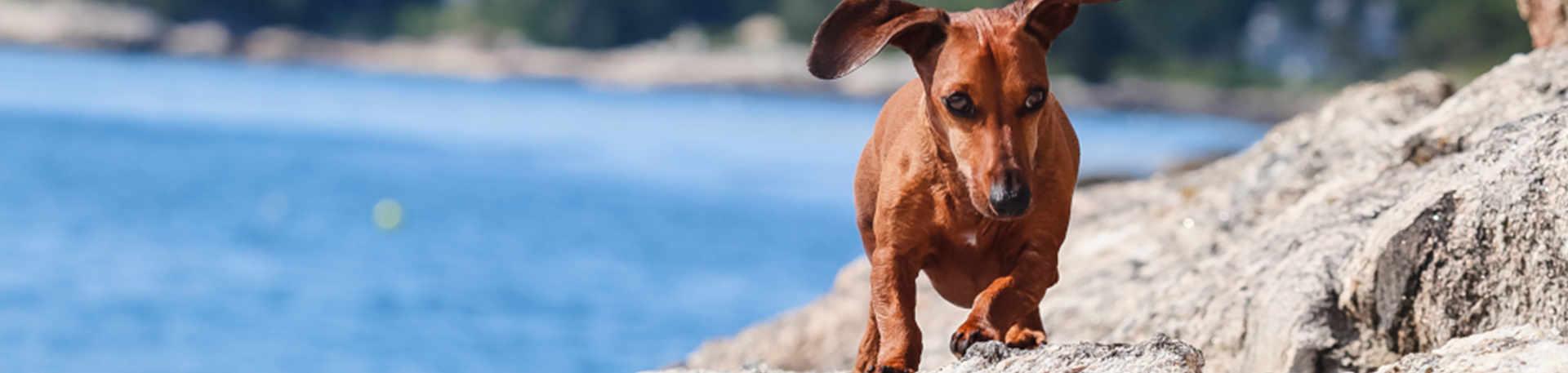 Boothbay-Region-Dog-Friendly-Resources-new
