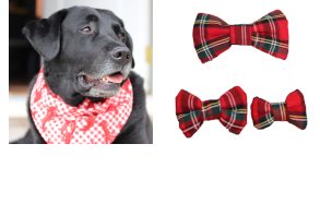 dog-gear-clothing-and-accessories