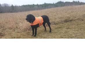 dog-gear-visibility