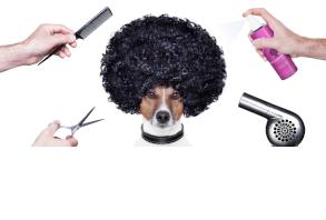dog-grooming-coat