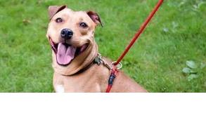 dog-leash-weiss-walkie-no-pull-leash