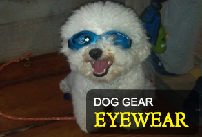 dog_gear-eyewear.jpg