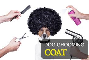 dog_grooming-coat.jpg