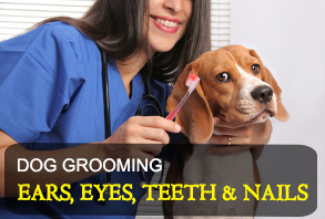 dog_grooming-ears_eyes_teeth_nails.jpg