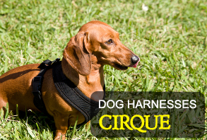 dog_harnesses-cirque.jpg