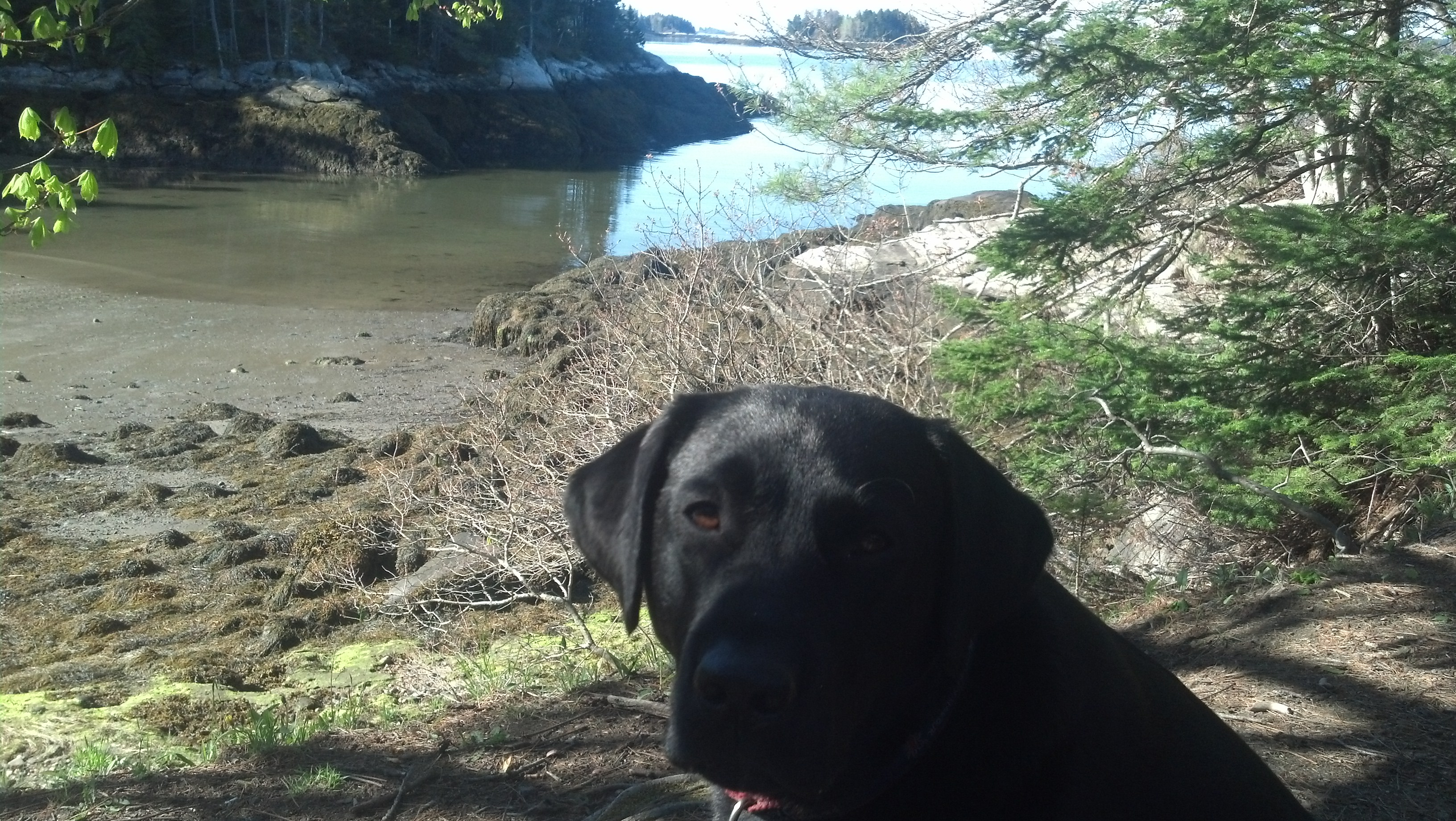 Boothbay Harbor Land Trust Challenge