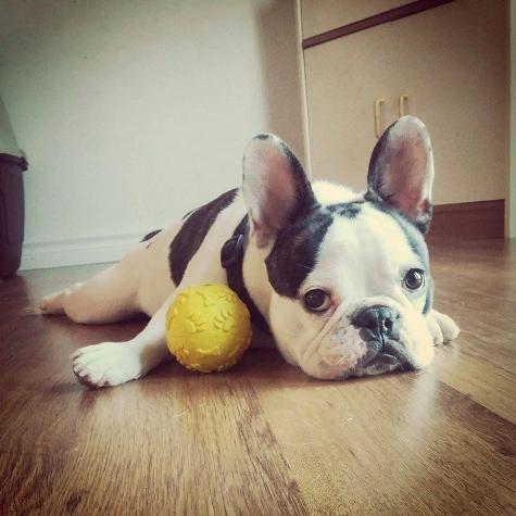 jw-dog-chew-toy-giggler-ball-4