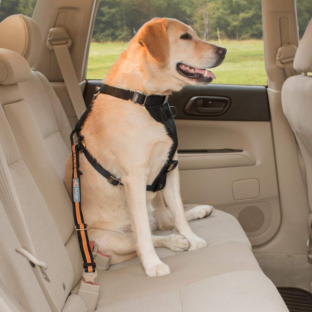 kg-dog-car-safety-seatbelt-tether-2.jpg