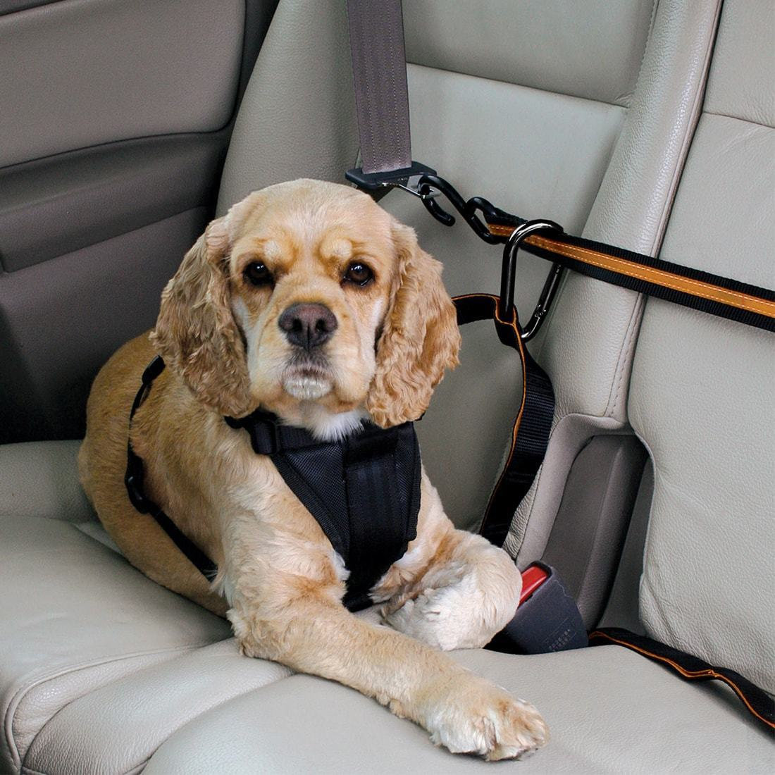 kg-dog-car-zip-line-restraint-2.jpg