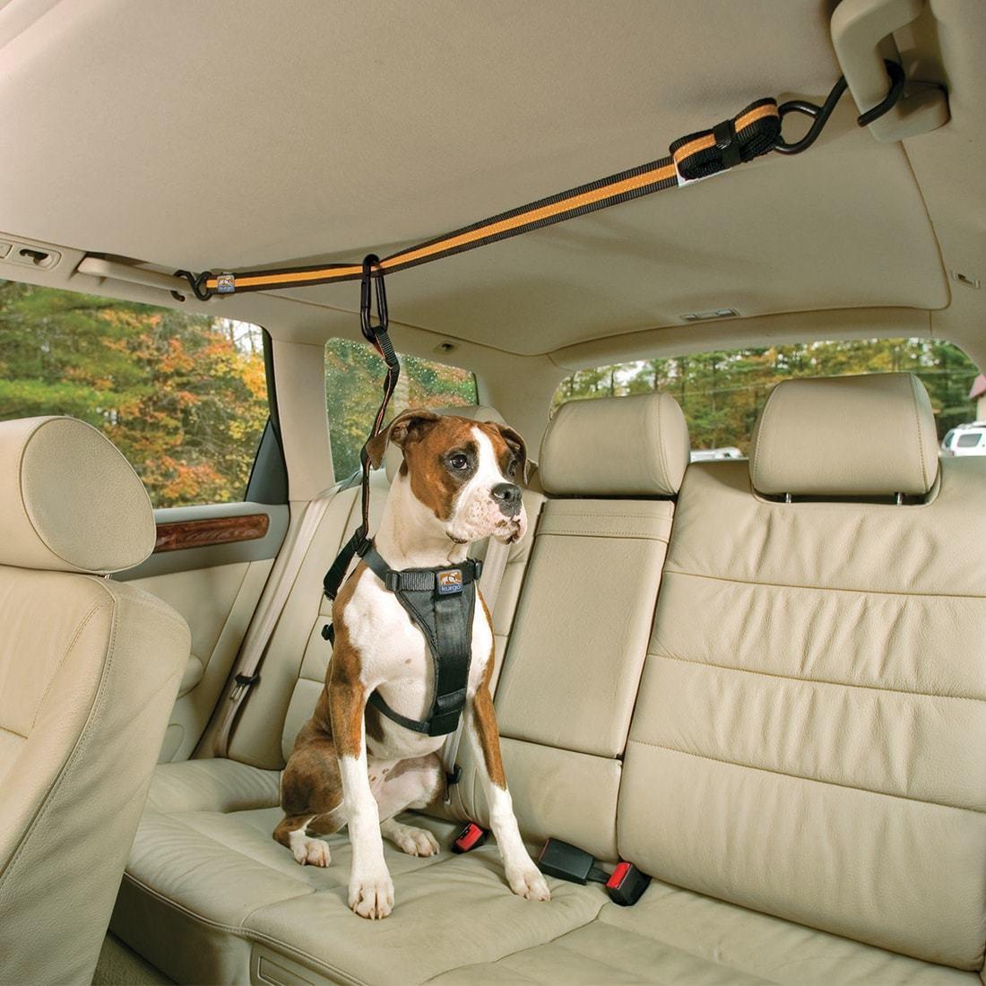 kg-dog-car-zip-line-restraint-4.jpg
