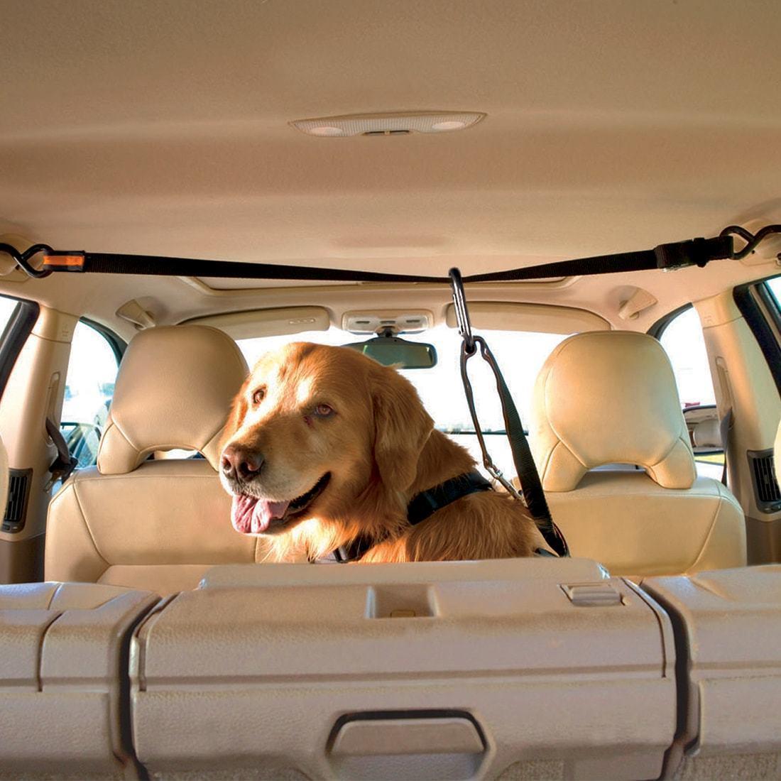 kg-dog-car-zip-line-restraint-5.jpg