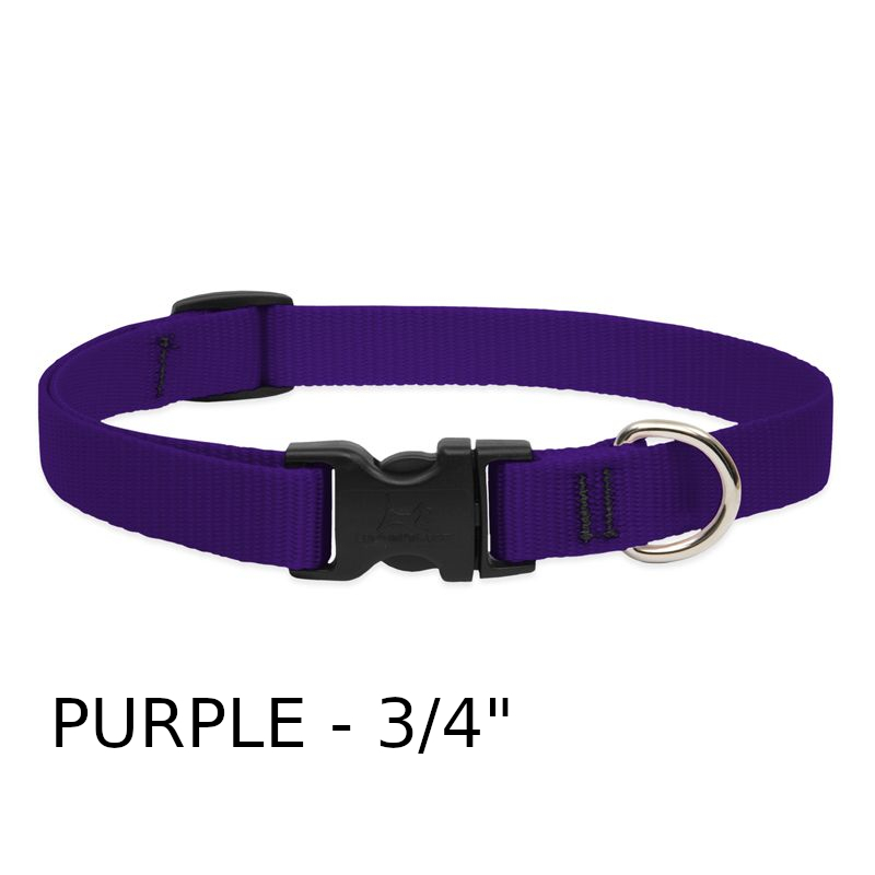 lp-dog-collar-nylon-purple-3_4-inch