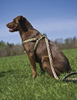 lp-dog-harness-1