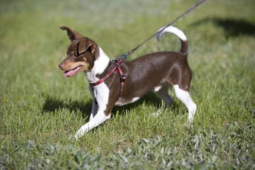 lp-dog-harness-4