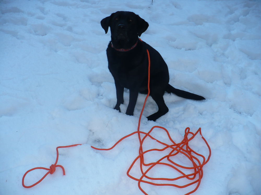 rope-dog-training-leash-blaze-orange-5.jpg