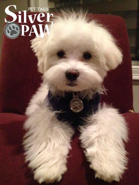 sp-collar-accessories-paw-3.jpg