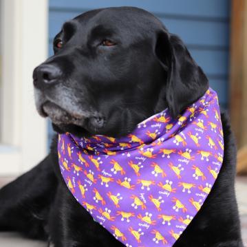 bd-reversible-dog-bandana-crabby-technicolor-paws-1