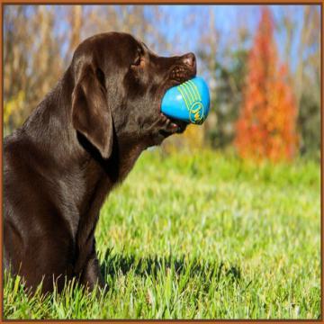 jw-isqueak-squeaking-dog-ball