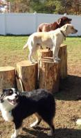 10 Free Full Days of Coastal Dog - Raffle Tickets