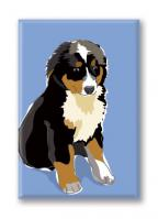 Bernese Mountain Dog (Puppy)