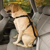 kg-dog-car-safety-harness-1.jpg