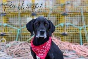 tsd-boothbay-harbor-dogs-calendar-2021-cover