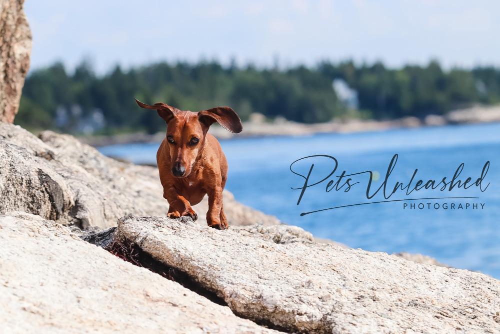 tsd-boothbay-harbor-dogs-calendar-2021-april