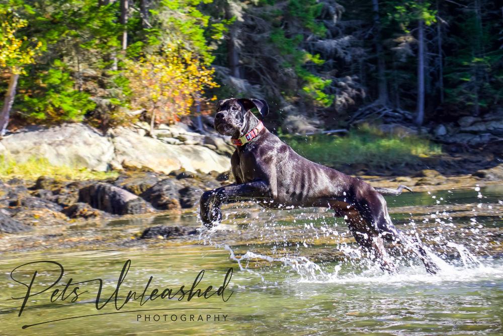 tsd-boothbay-harbor-dogs-calendar-2021-august
