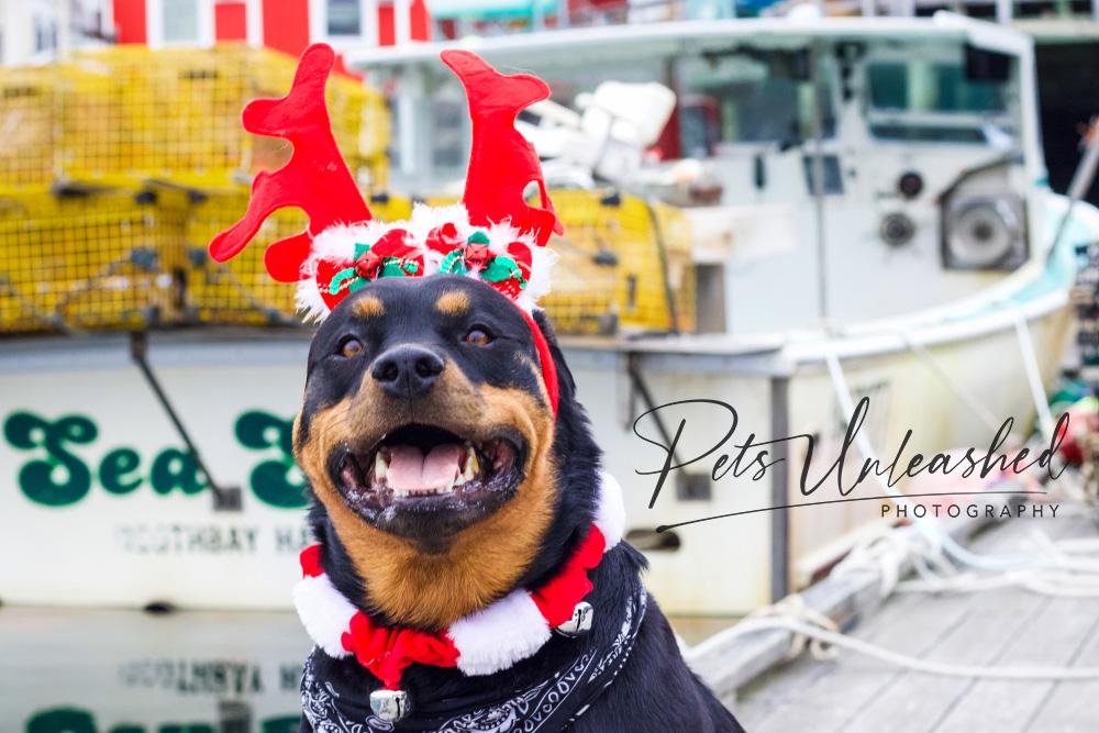 tsd-boothbay-harbor-dogs-calendar-2021-december