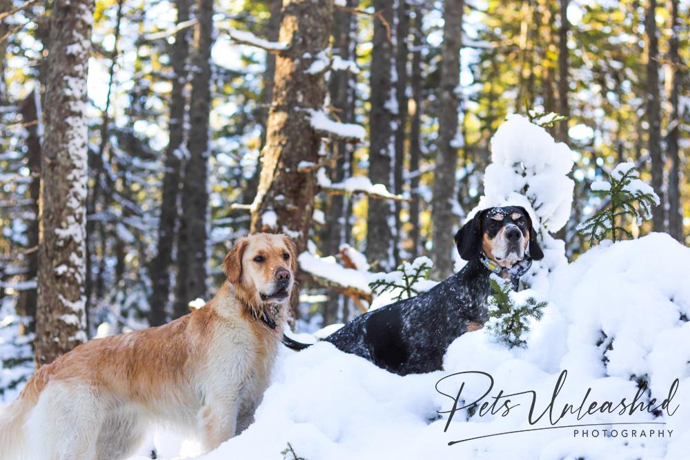 tsd-boothbay-harbor-dogs-calendar-2021-january