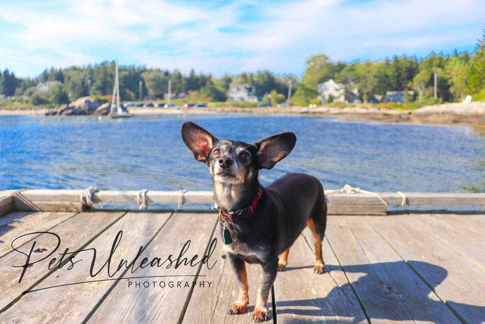 tsd-boothbay-harbor-dogs-calendar-2021-june