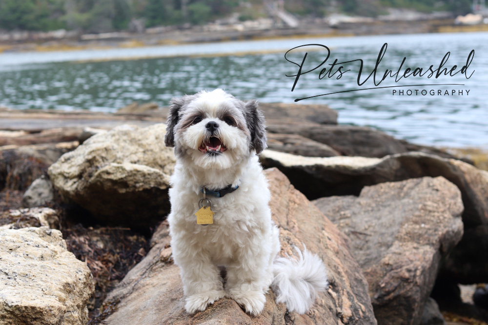 tsd-boothbay-harbor-dogs-calendar-2021-march