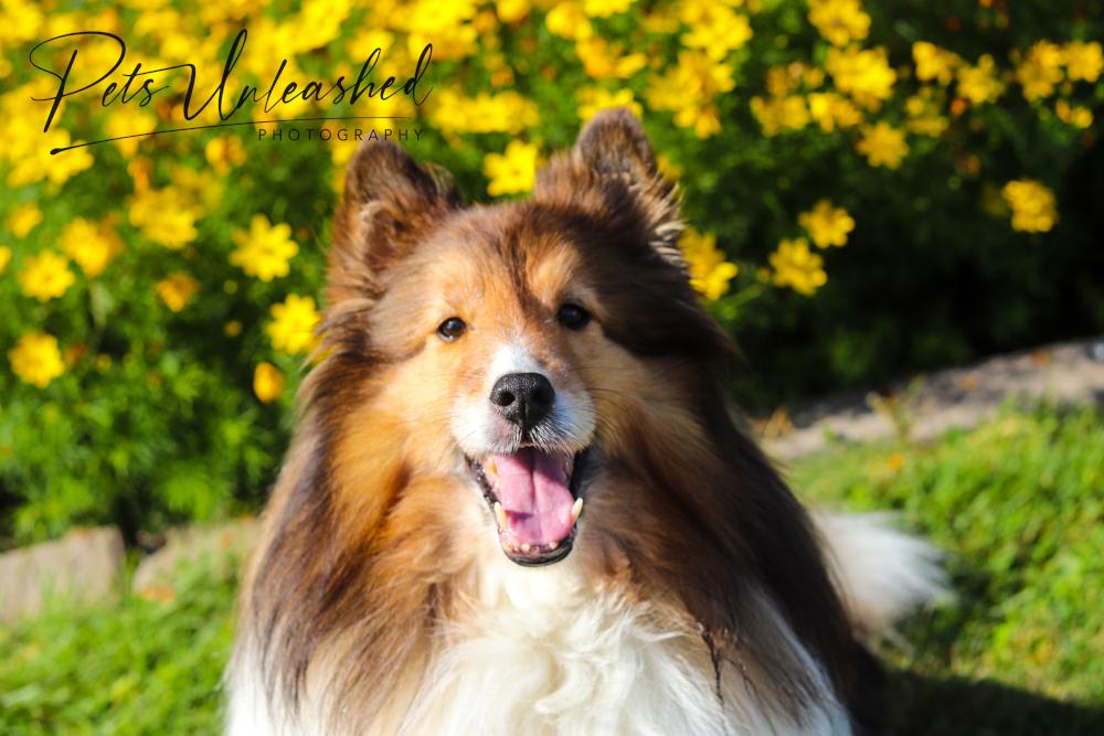 tsd-boothbay-harbor-dogs-calendar-2021-may