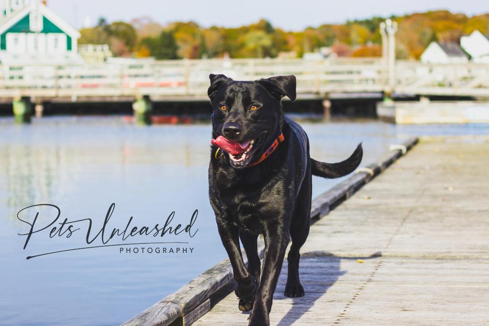 tsd-boothbay-harbor-dogs-calendar-2021-october