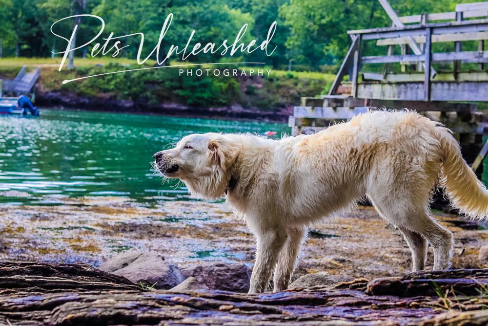 tsd-boothbay-harbor-dogs-calendar-2021-september