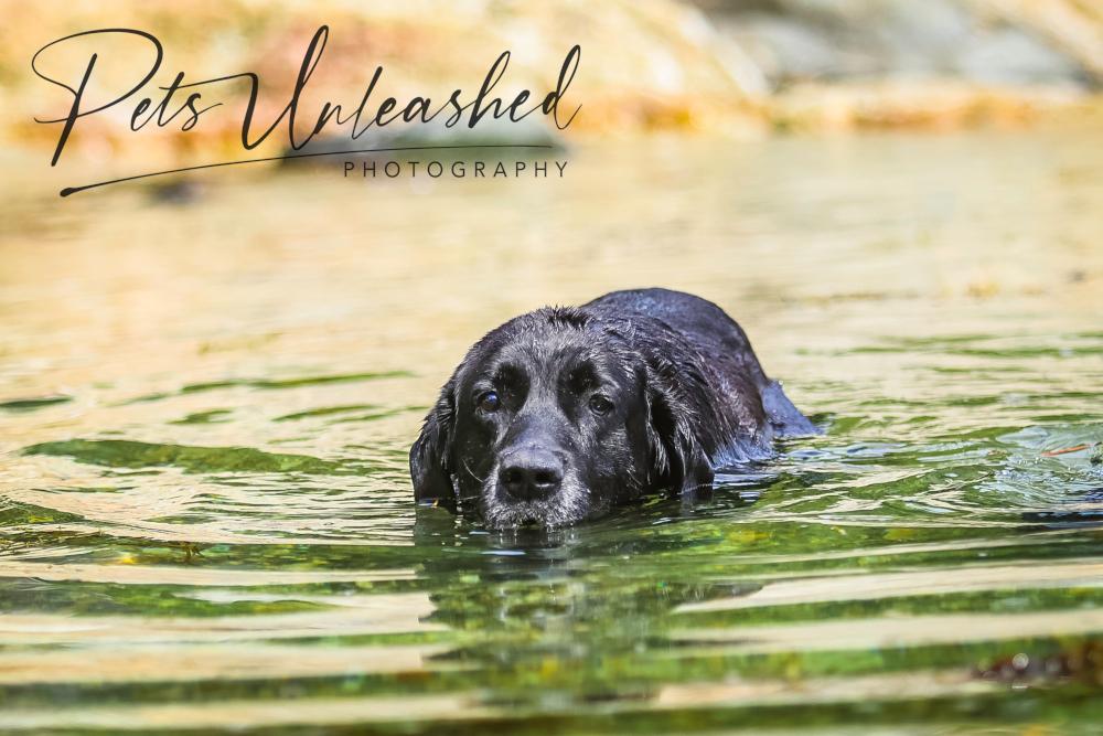 tsd-boothbay-harbor-dogs-calendar-2022-april